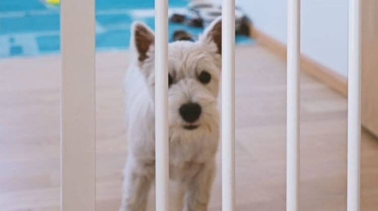 The 5 Best Portable Dog Fences for RV Travel
